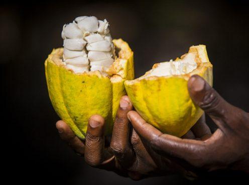 Cacao Frais CÉMOI